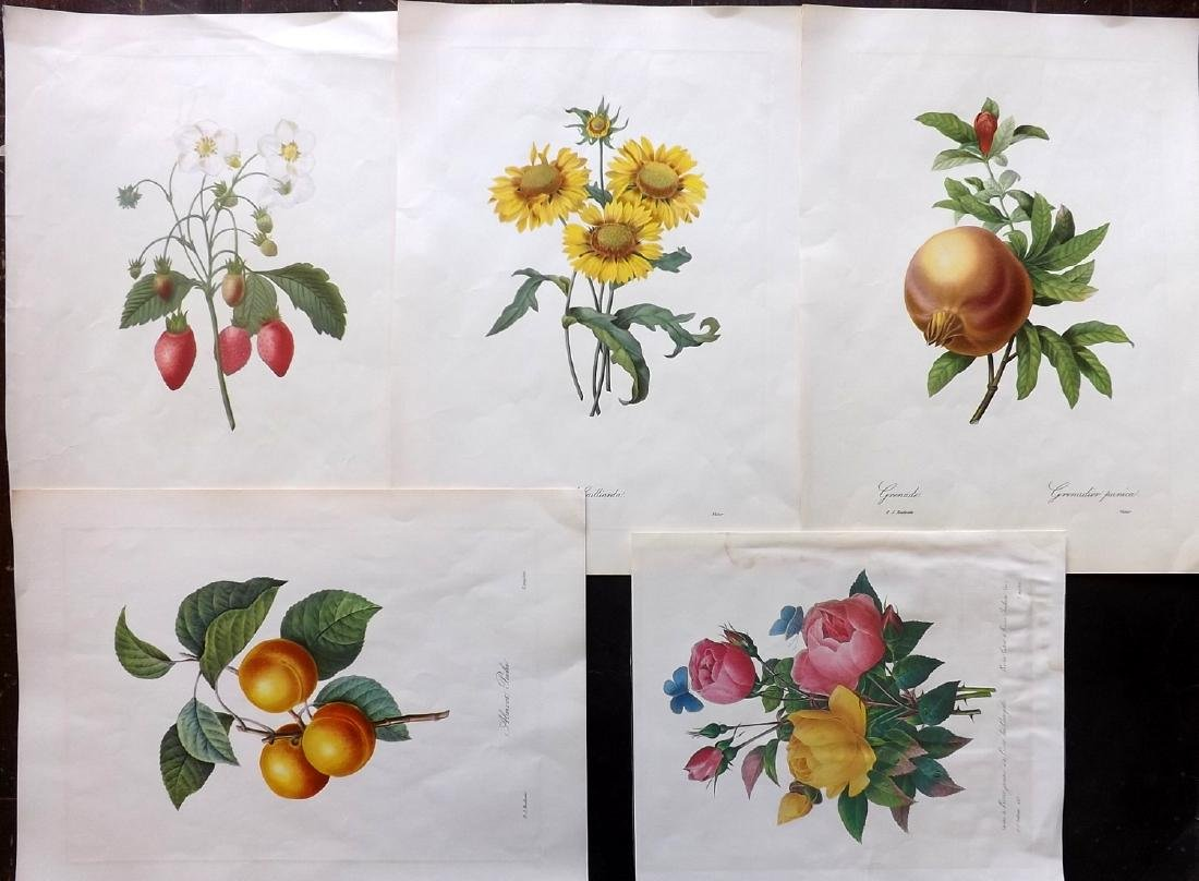 Botanical Reproductions C1950 Lot of 5 by Redoute