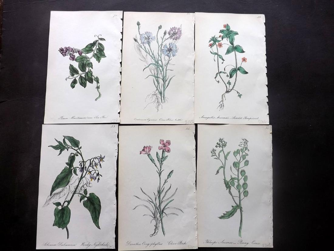 Hogg & Johnson C1870 Lot of 7 HC Botanicals. Tulip etc