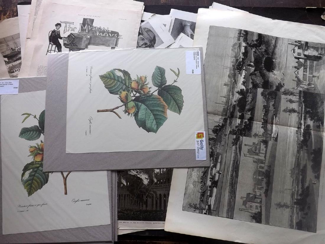 Mixed Mounted Prints 19th-20th Century Lot of 200+ - 4