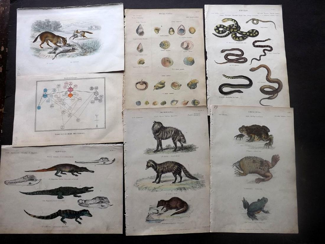 Natural History 18th-19thC Lot of 20 Prints. Mostly HC - 2