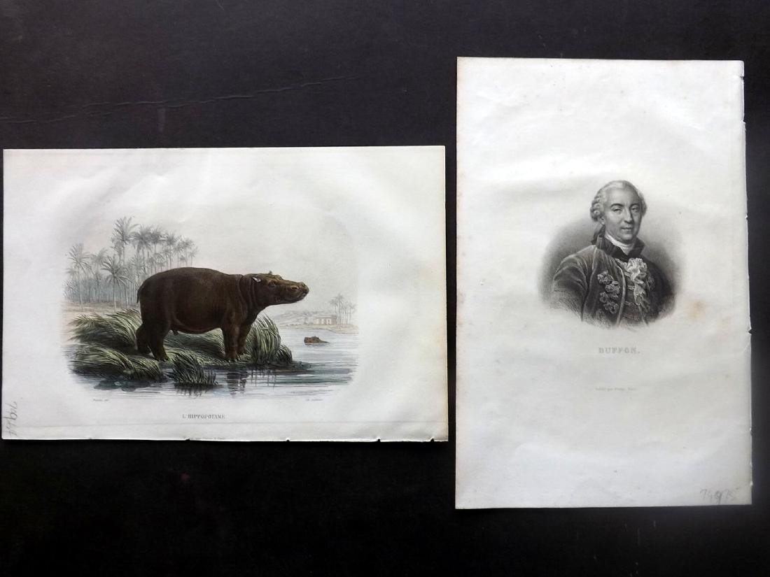 Natural History 18th-19thC Lot of 20 Prints. Mostly HC - 3