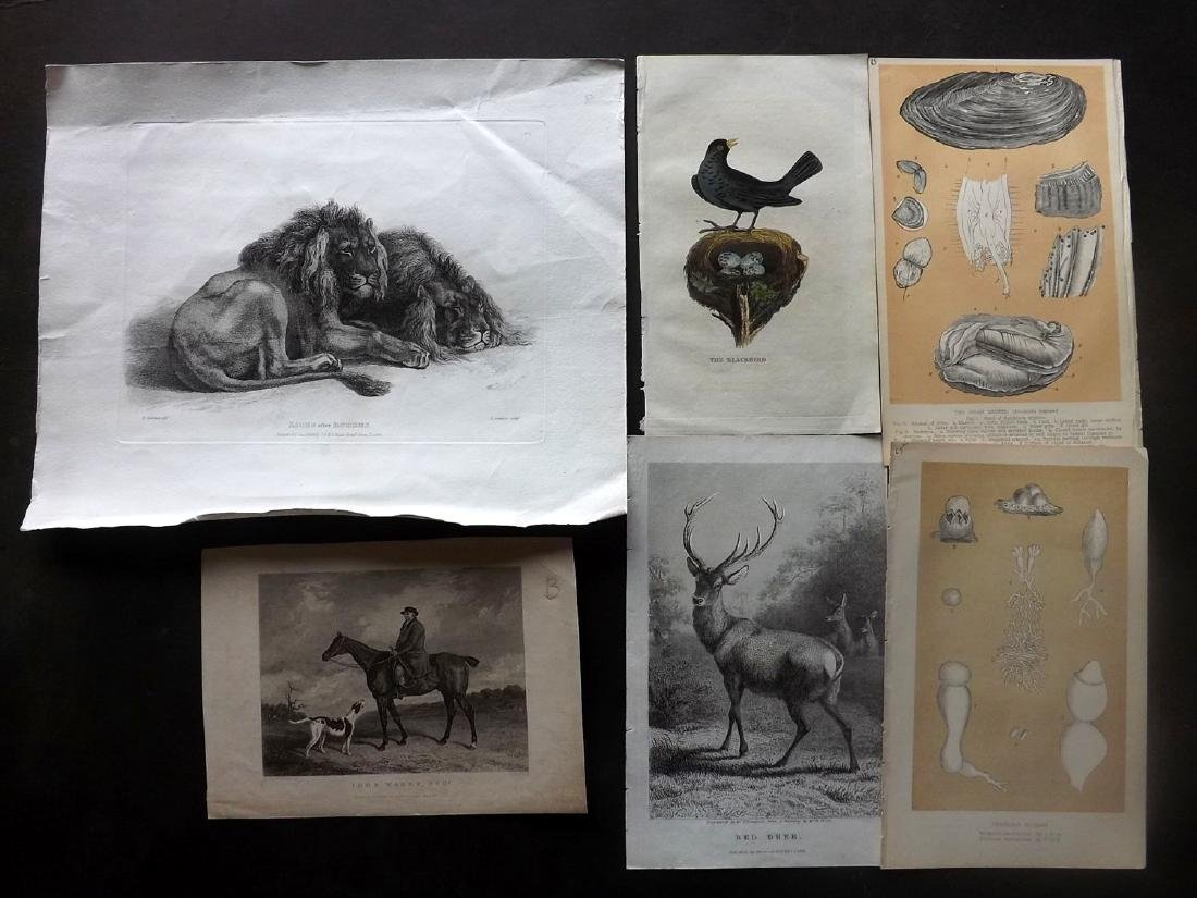Natural History & Birds 19th Century Lot of 17 Prints - 2