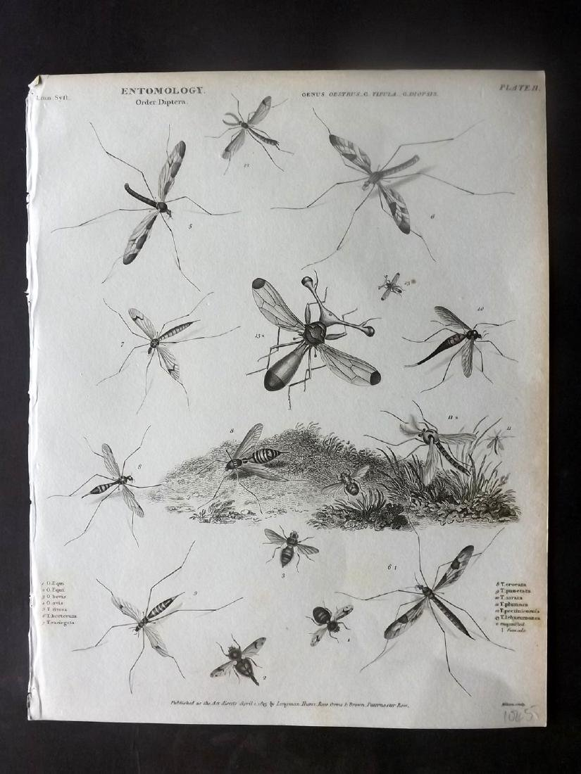 Rees, Abraham C1810 Group of 5 Prints of Insects - 2