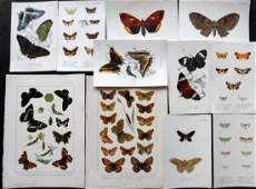 Butterflies 19th Century Lot of 11 Prints by Kirby