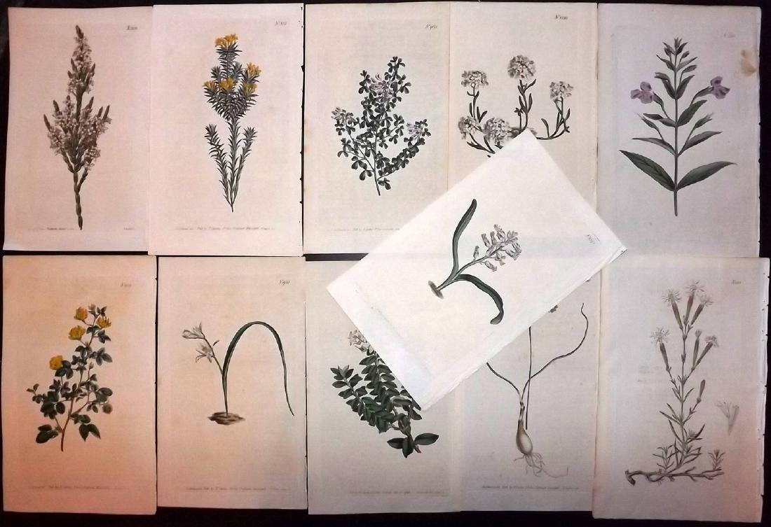 Curtis, William 1790's Lot of 11 HCol Botanical Prints