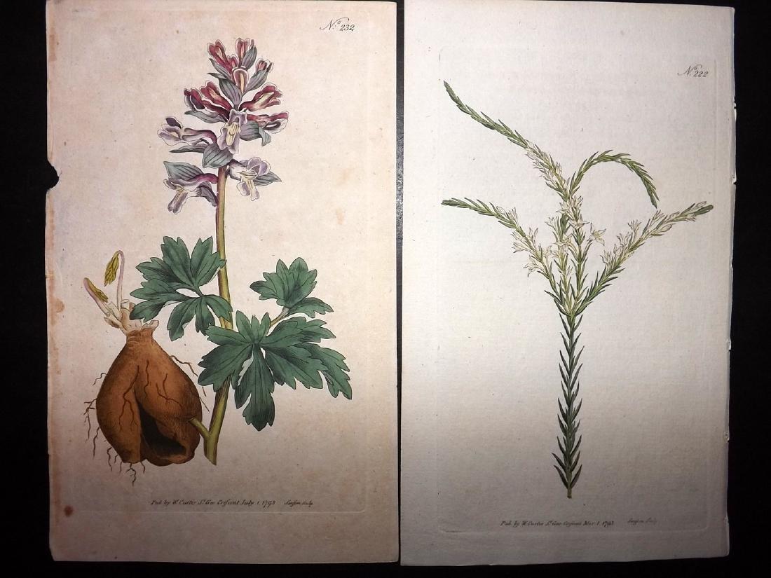Curtis, William 1790's Lot of 12 HCol Botanical Prints - 2