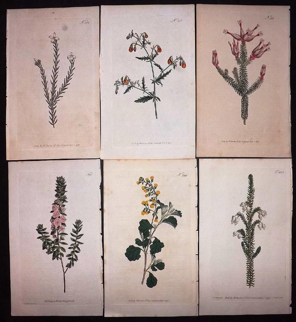 Curtis, William 1790's Lot of 6 HCol Botanical Prints