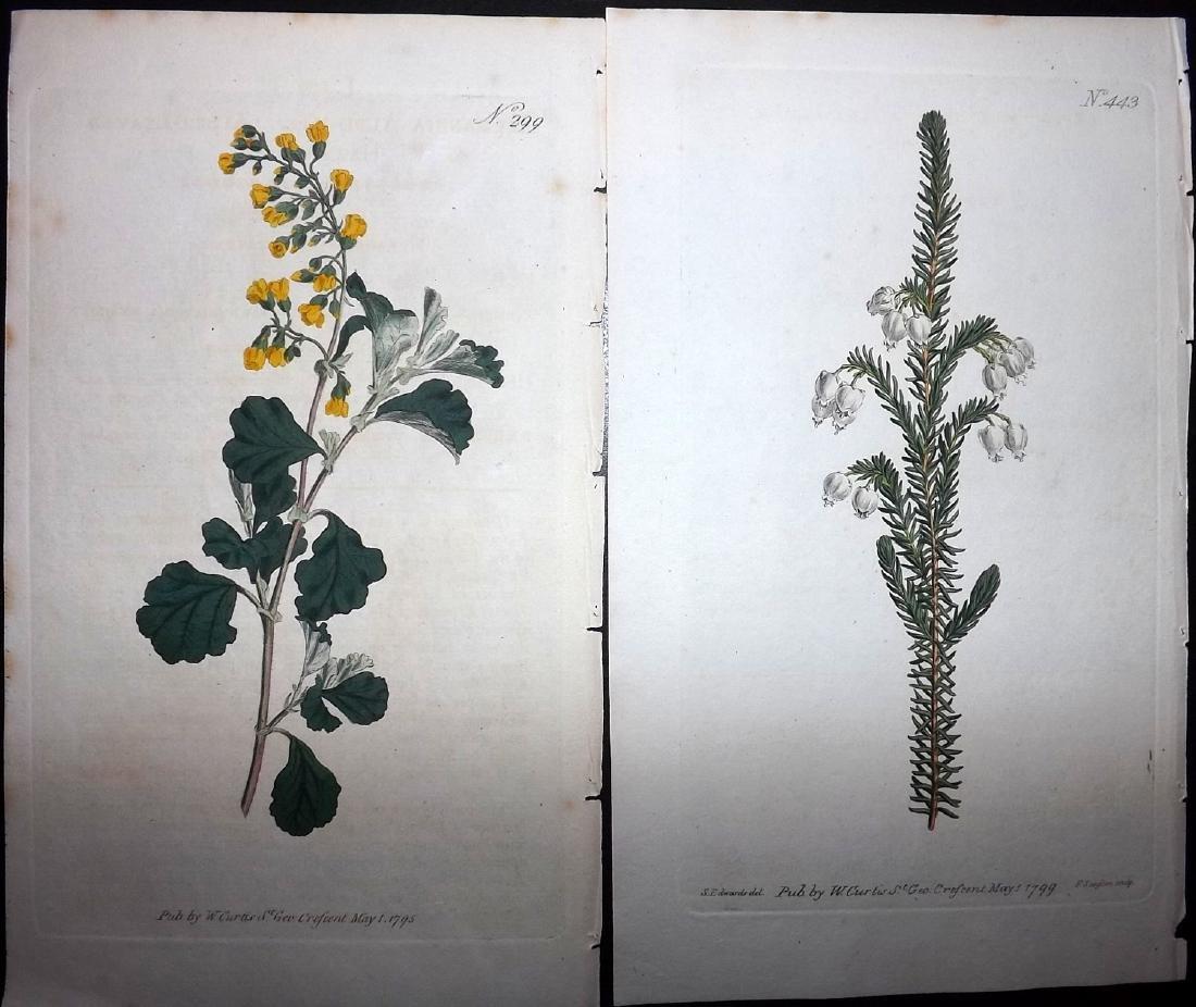 Curtis, William 1790's Lot of 6 HCol Botanical Prints - 2