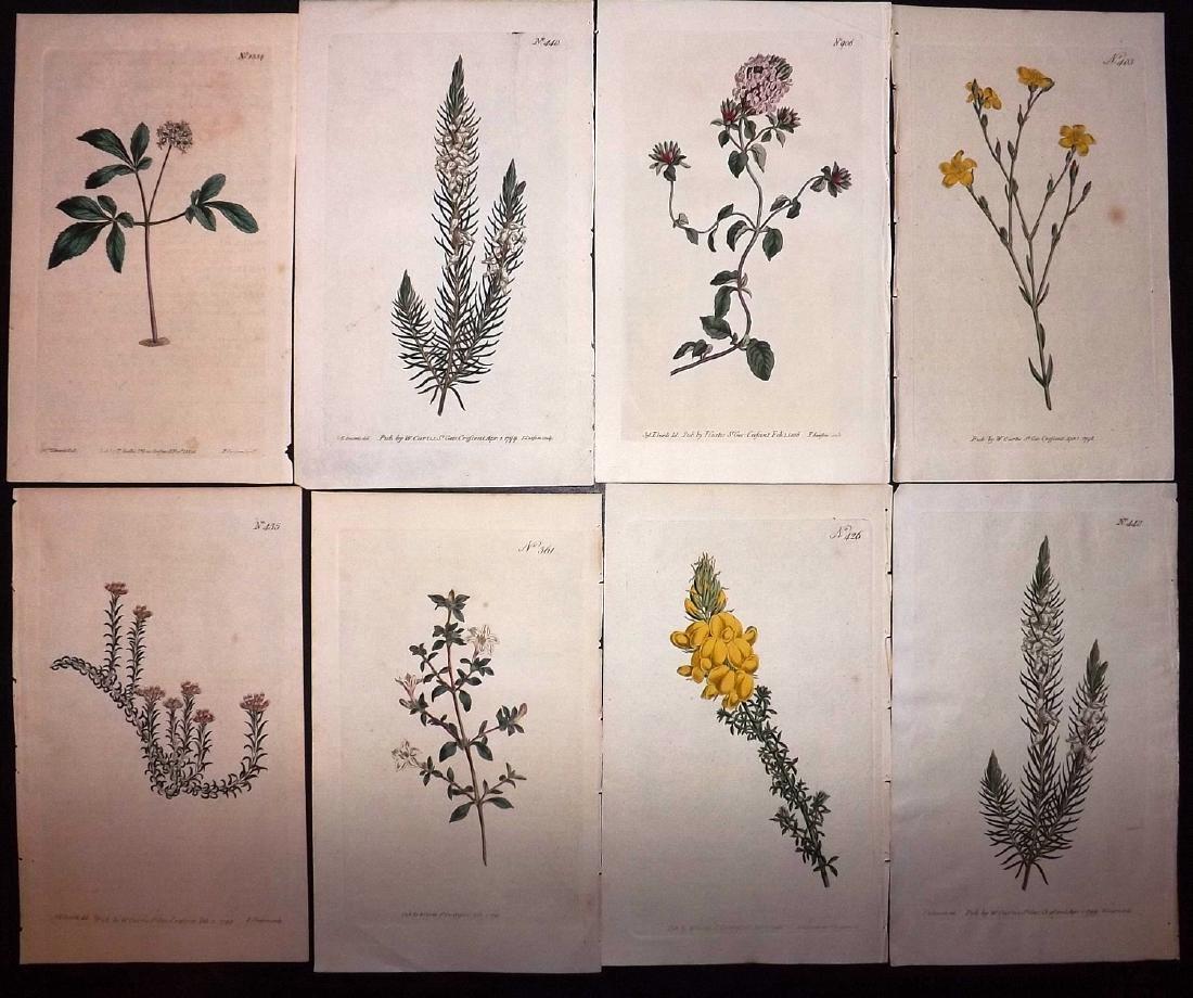Curtis, William 1790's Lot of 8 HCol Botanical Prints