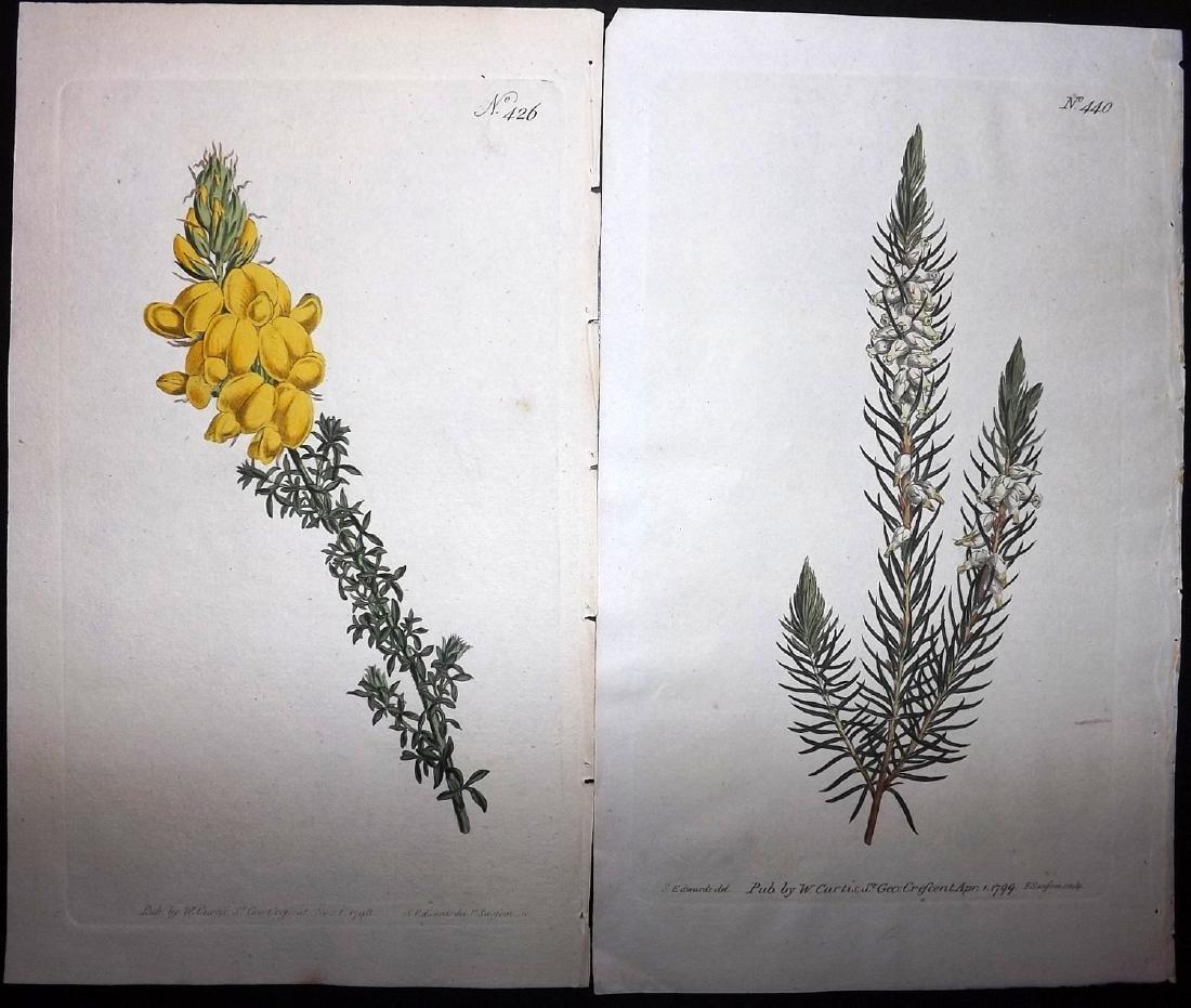Curtis, William 1790's Lot of 8 HCol Botanical Prints - 2