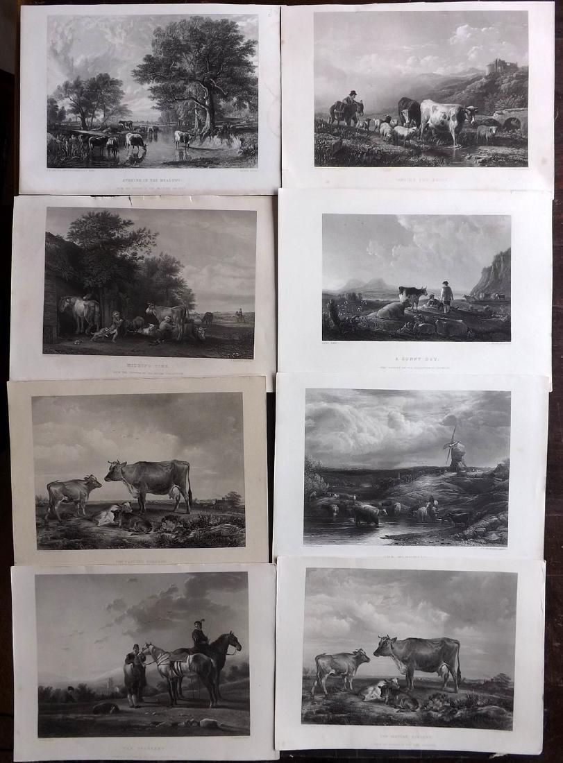 Art Journal C1860 Lot of 8 Steel Engravings. Animals