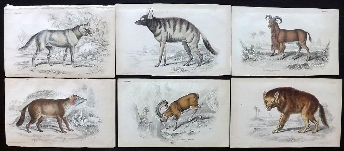 Jardine, William C1840 Lot of 6 Hand Col Animal Prints