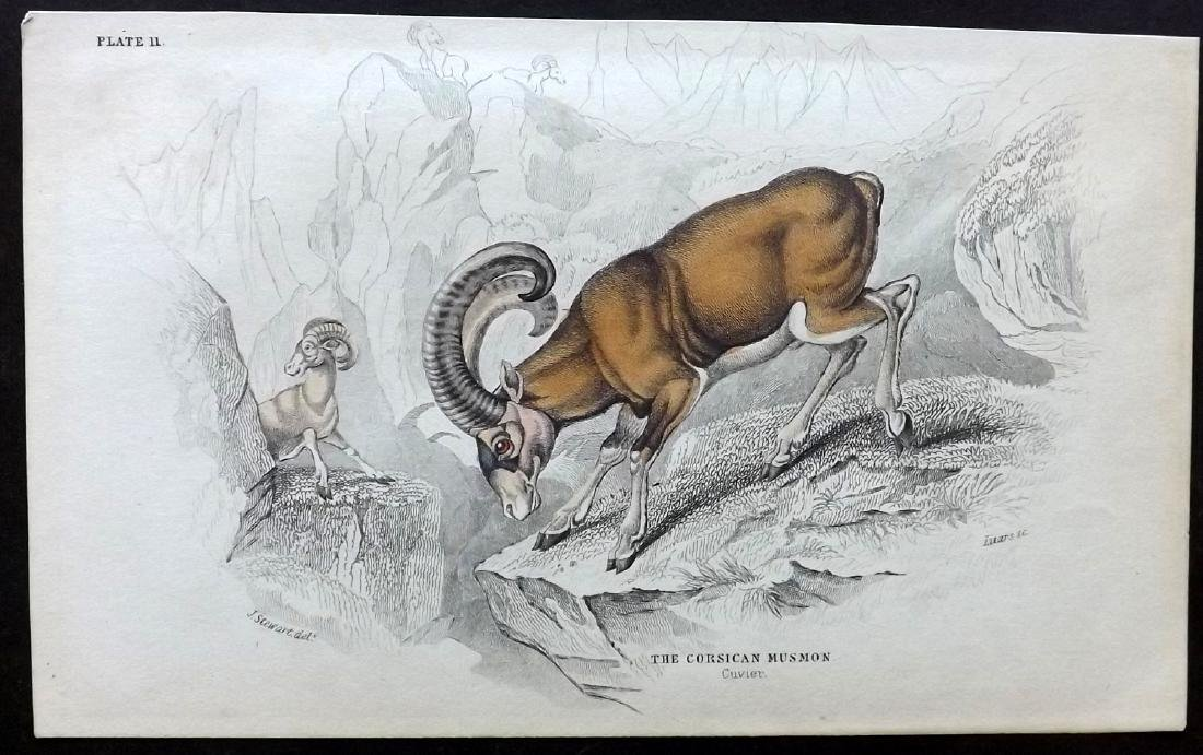 Jardine, William C1840 Lot of 6 Hand Col Animal Prints - 2
