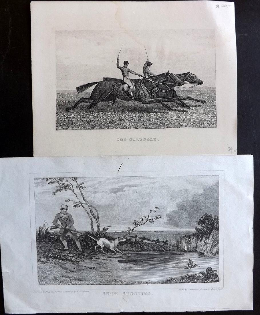 Natural History & Birds 19th Cent Lot of 16 Prints - 2