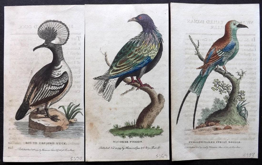 After George Edwards 1799 Group of 3 HC Bird Prints
