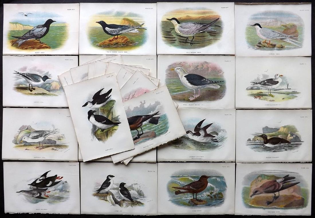 Lloyds's 1897 Lot of 31 Antique Bird Prints