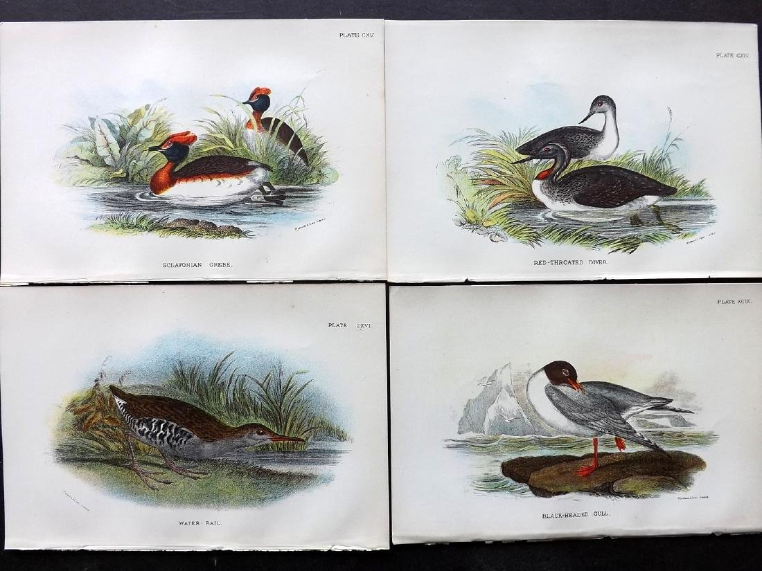 Lloyds's 1897 Lot of 31 Antique Bird Prints - 3