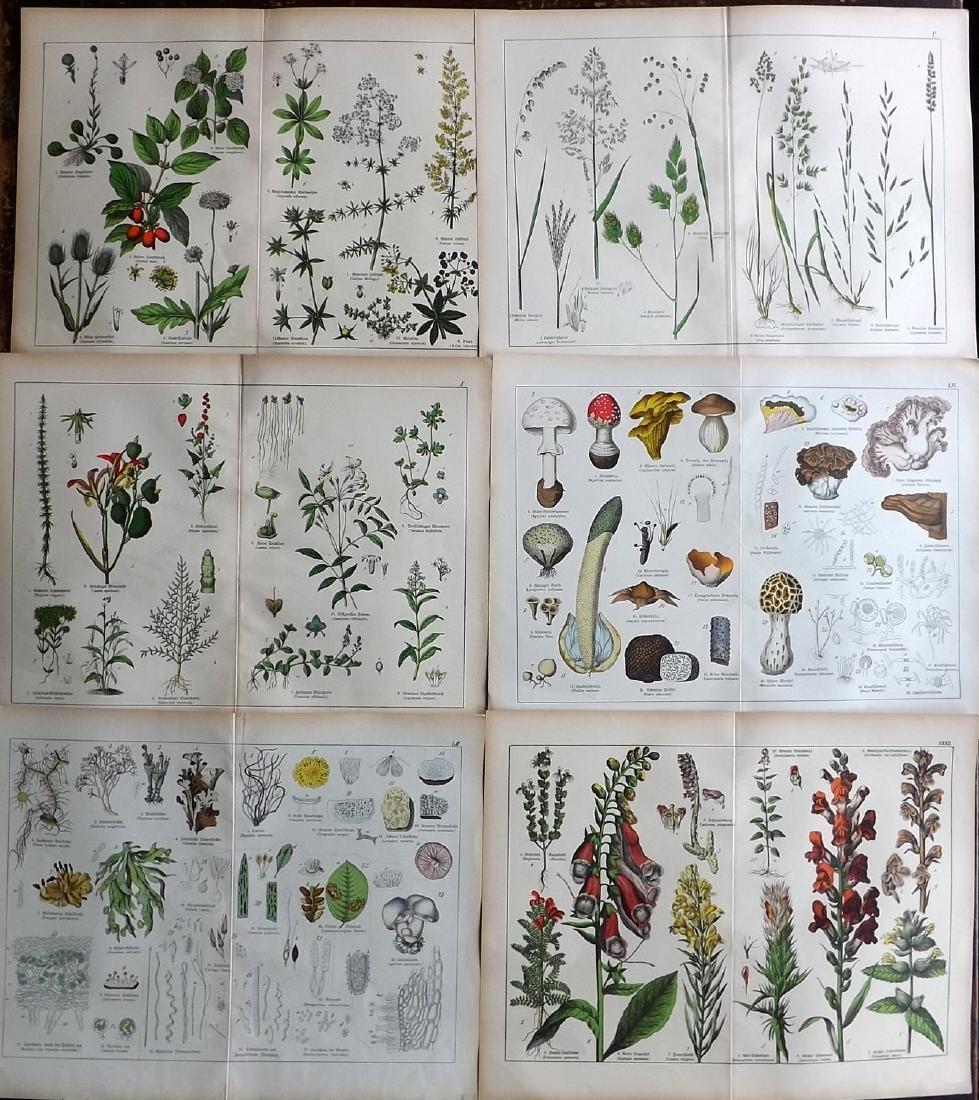 Schubert, Gotthilf 1880 Lot of 6 Large Botanical Prints