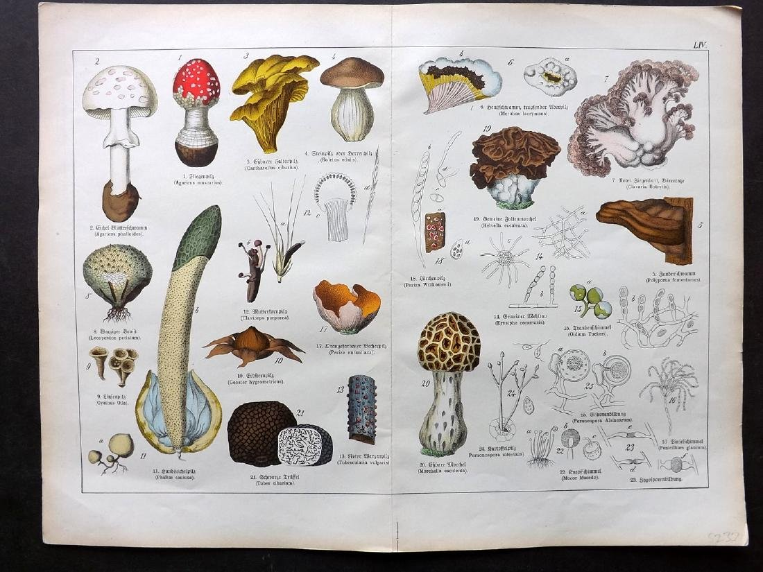 Schubert, Gotthilf 1880 Lot of 6 Large Botanical Prints - 2