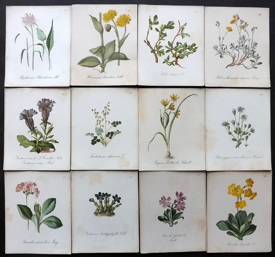 Seboth & Graf 1879 Lot of 12 Botanical Prints