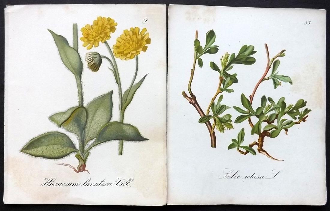 Seboth & Graf 1879 Lot of 12 Botanical Prints - 2
