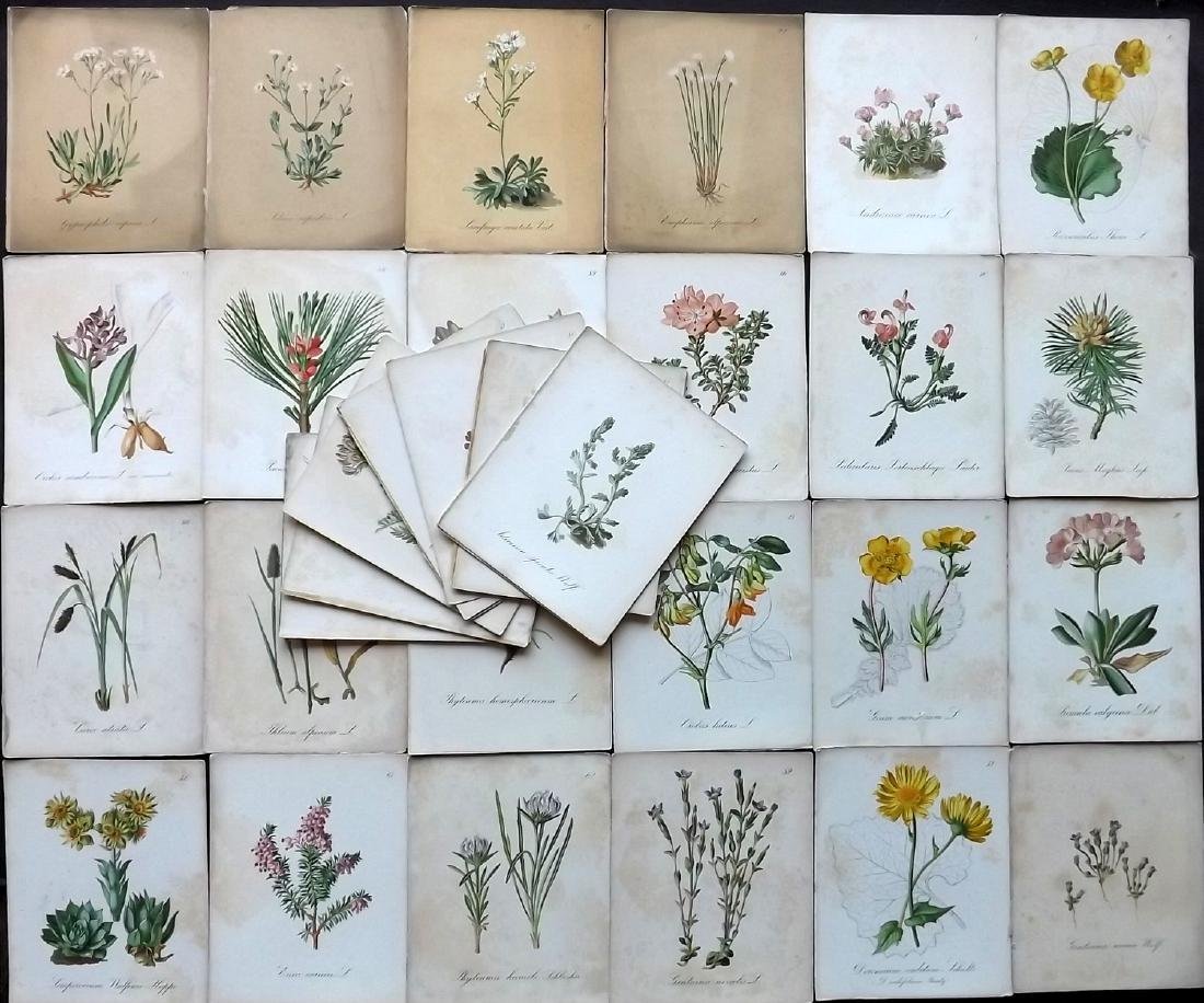 Seboth & Graf 1879 Lot of 35 Botanical Prints