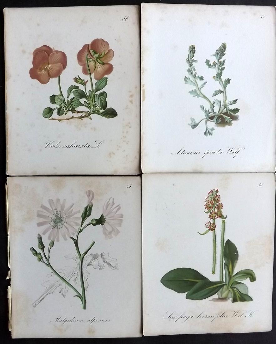 Seboth & Graf 1879 Lot of 35 Botanical Prints - 2