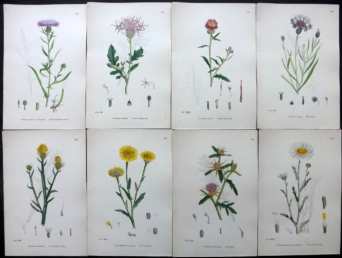 Sowerby, James 1883 Lot of 8 Hand Col Botanical Prints