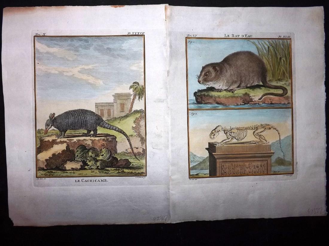 Buffon, Comte de C1770 Pair of HC First Edition Prints