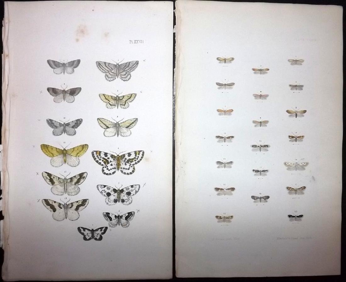 Morris, Francis 1871 Lot of 13 Hand Col Moth Prints - 2