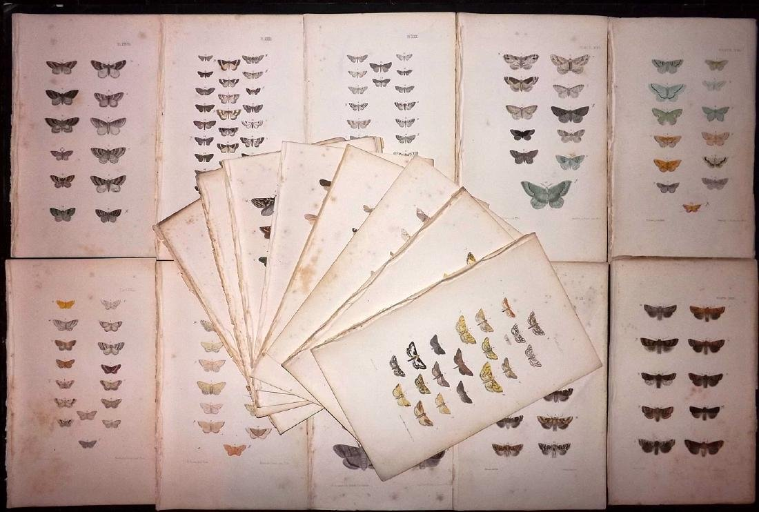 Morris, Francis 1871 Lot of 18 Hand Col Moth Prints