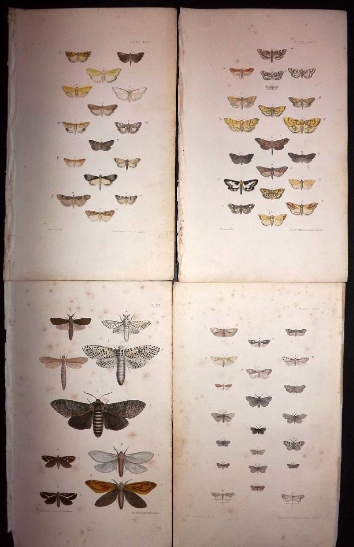 Morris, Francis 1871 Lot of 18 Hand Col Moth Prints - 2