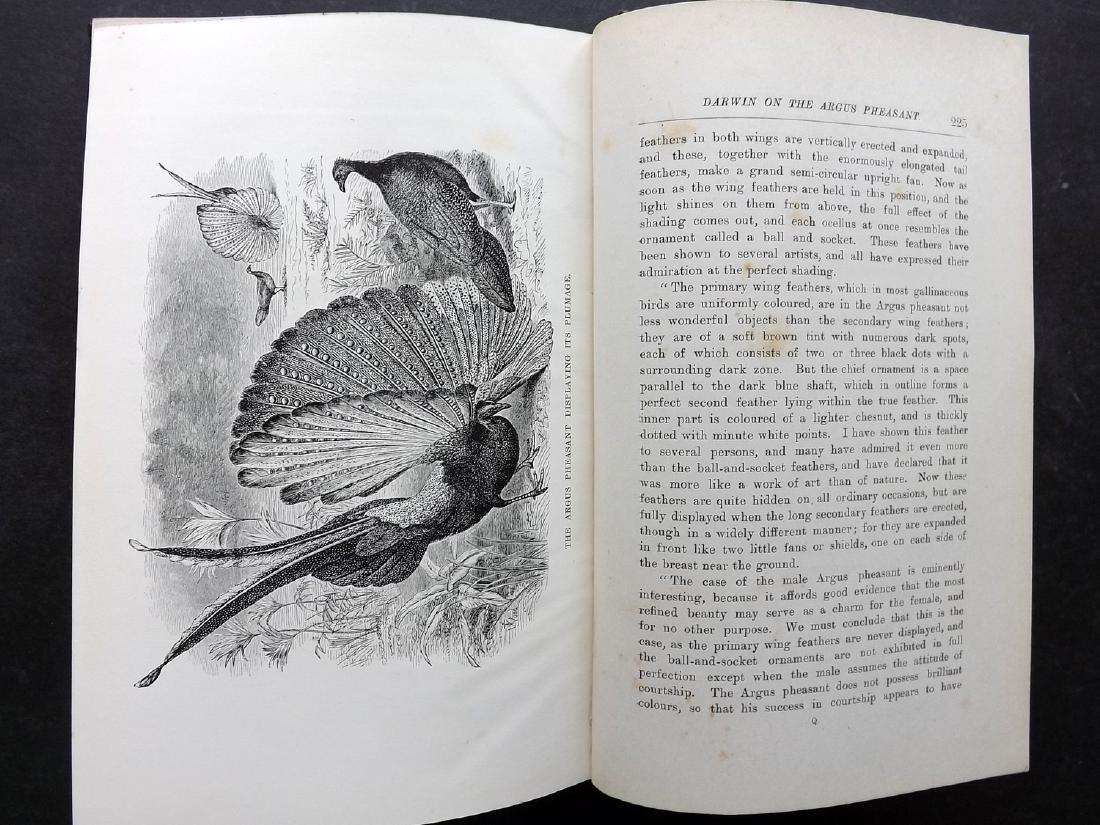 Book - Tegetmeier, W. B. - Pheasants, 16 Plates, 1897 - 5