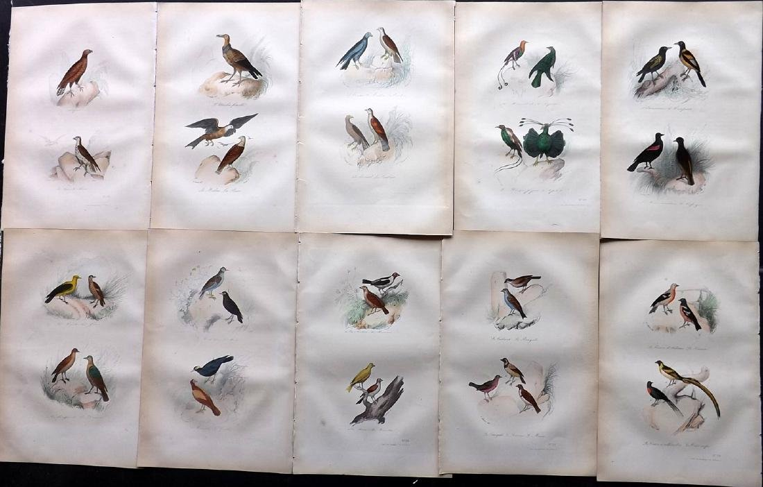 Buffon, Comte de 1857 Lot of 10 Hand Col Bird Prints