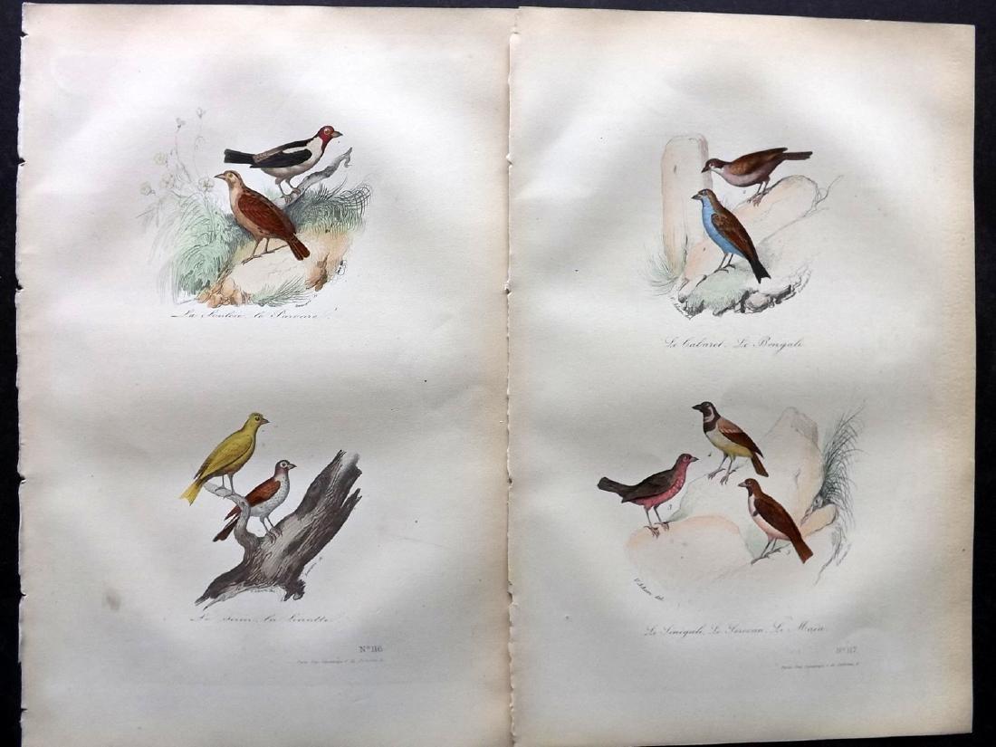 Buffon, Comte de 1857 Lot of 10 Hand Col Bird Prints - 2