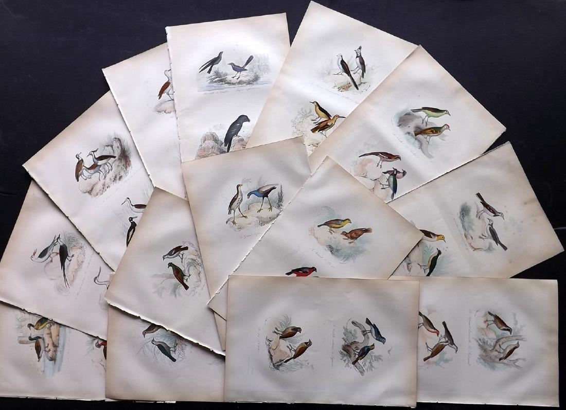 Buffon, Comte de 1857 Lot of 15 Hand Col Bird Prints