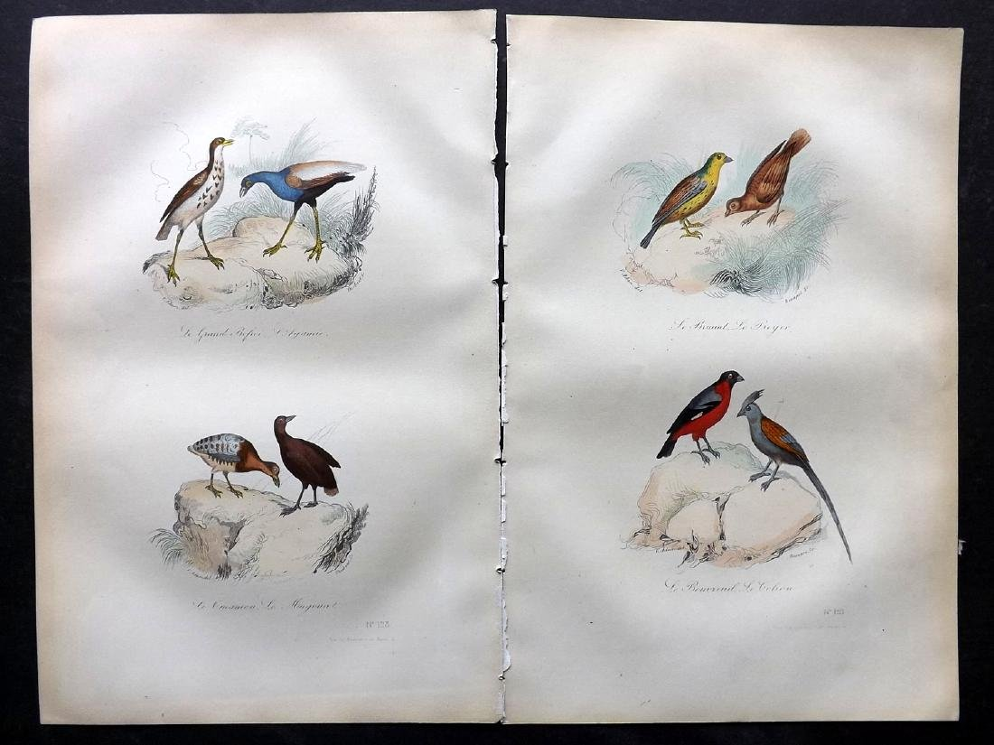 Buffon, Comte de 1857 Lot of 15 Hand Col Bird Prints - 2