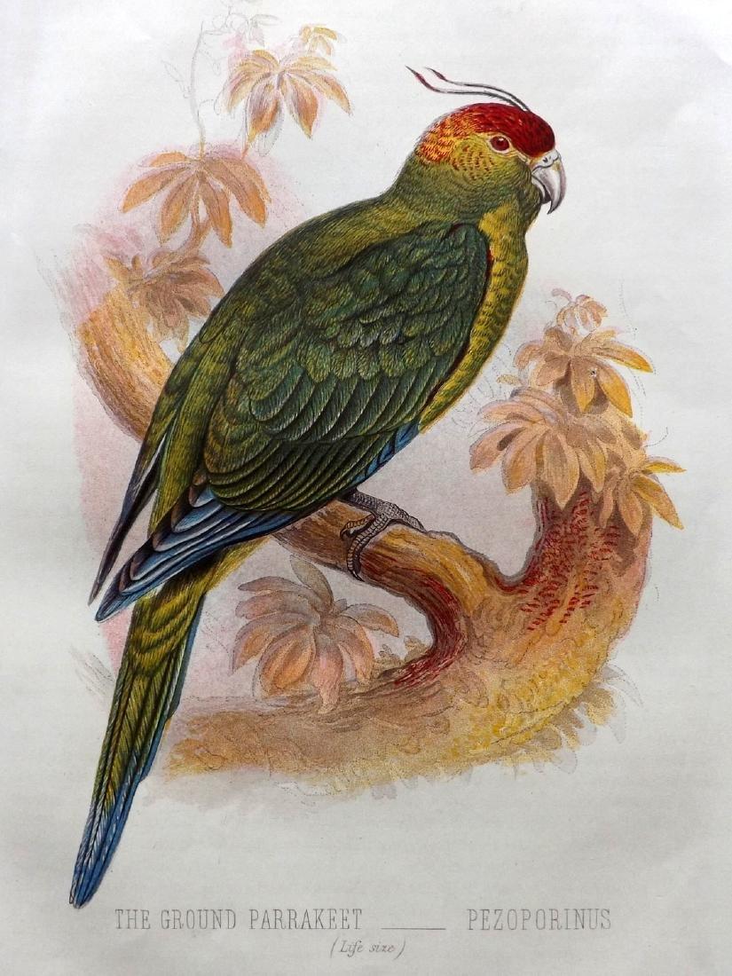 Jones, Thomas Rymer 1869 Pair of Parrot Bird Prints - 2