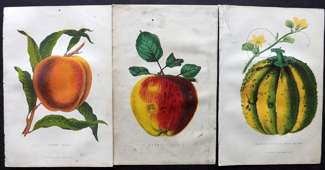 Anderson, James C1875 Group of 3 Fruit Prints