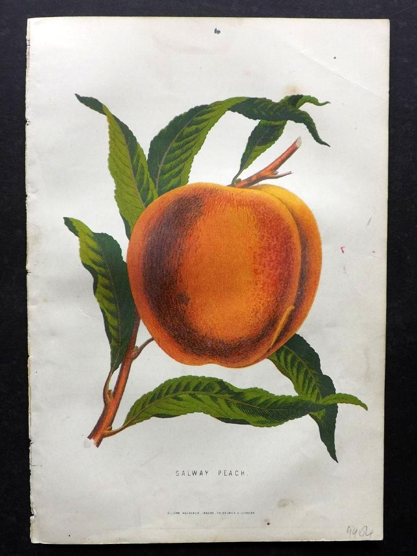 Anderson, James C1875 Group of 3 Fruit Prints - 2