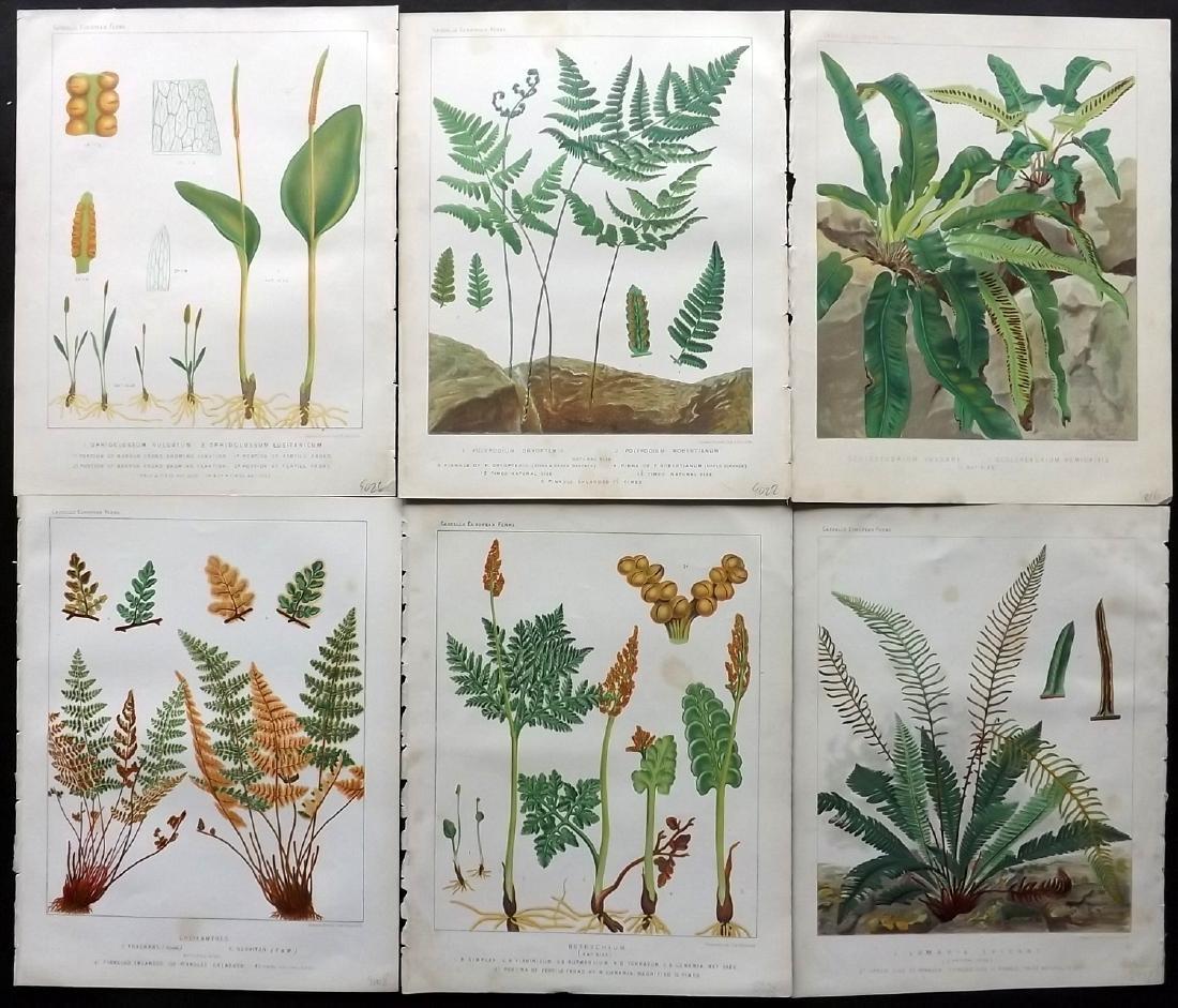 Britten, James 1881 Lot of 6 Antique Fern Prints