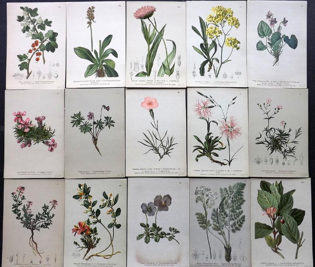 Hartinger, Anton 1884 Lot of 15 Botanical Prints