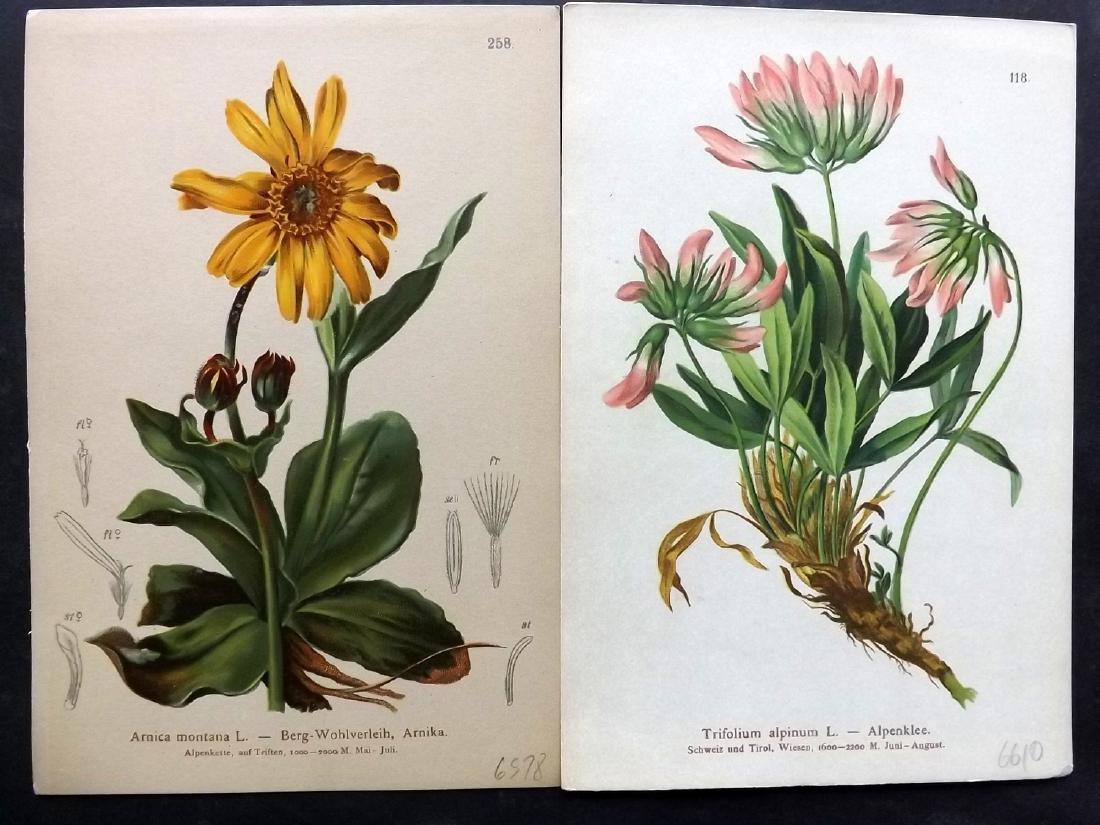 Hartinger, Anton 1884 Lot of 15 Botanical Prints - 2