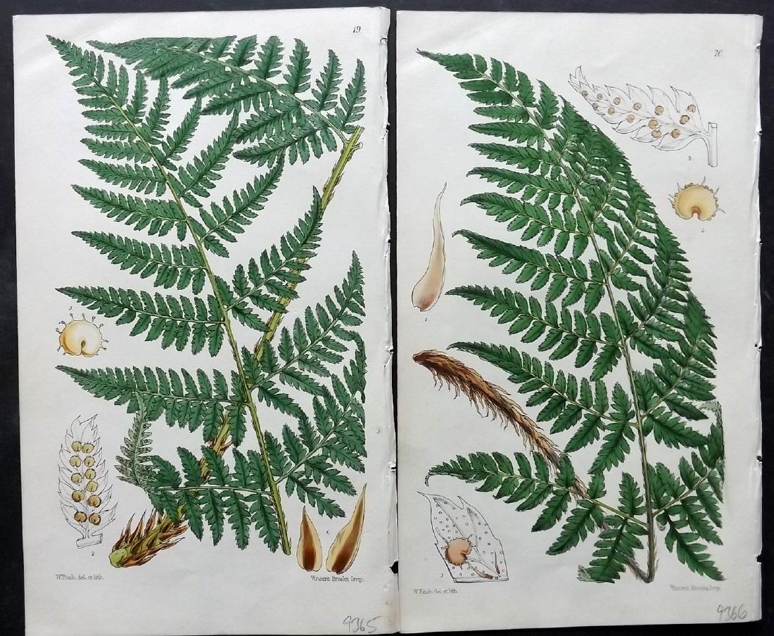 Hooker, William 1861 Lot of 6 Fine Hand Col Fern Prints - 2