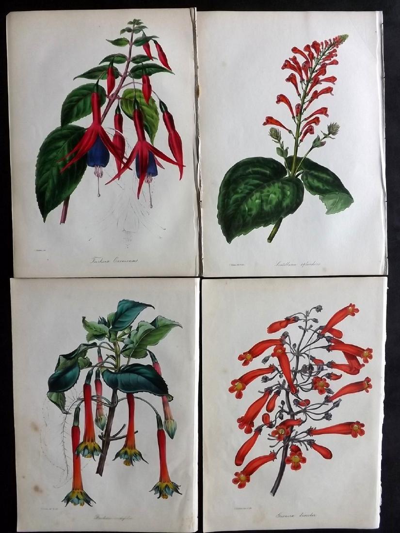 Paxton, Joseph 1842 Lot of 4 Hand Col Botanical Prints