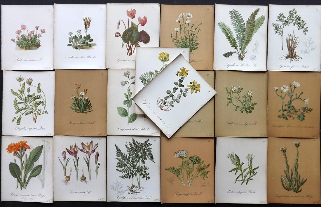 Seboth & Graf 1884 Lot of 20 Botanical Prints