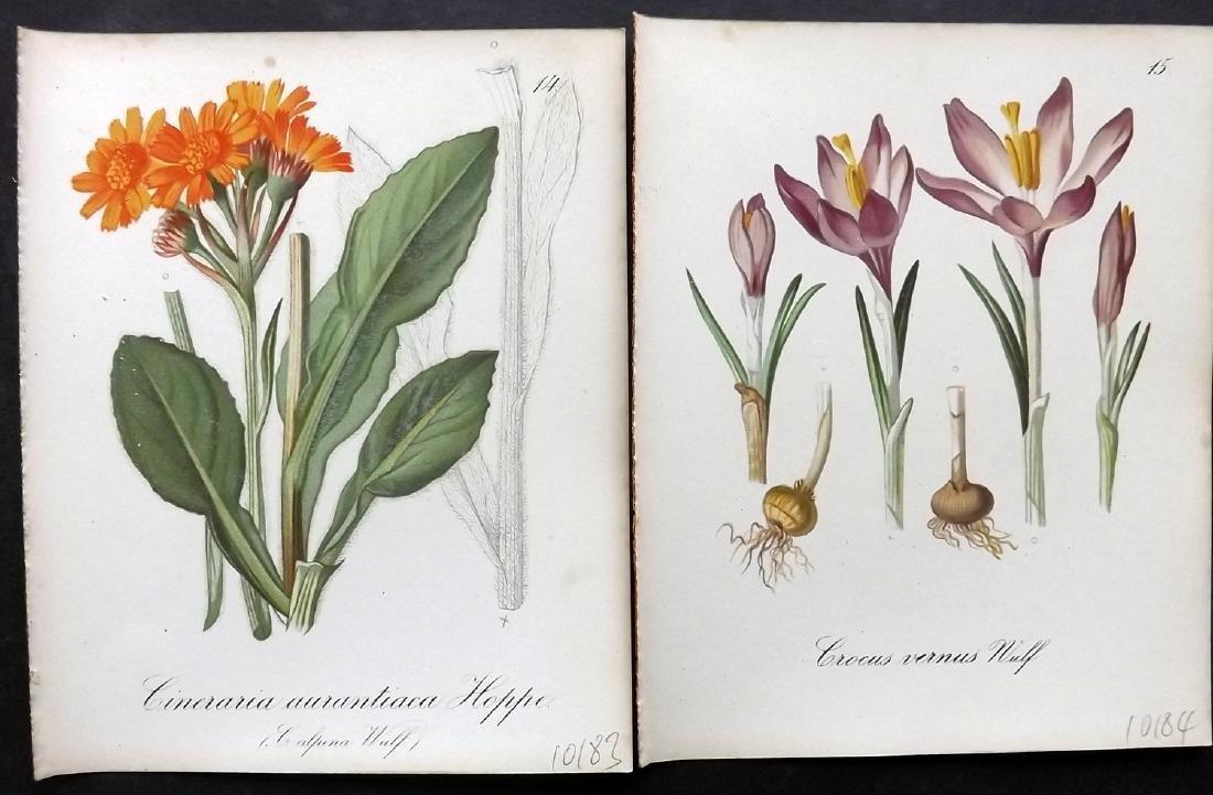 Seboth & Graf 1884 Lot of 20 Botanical Prints - 2