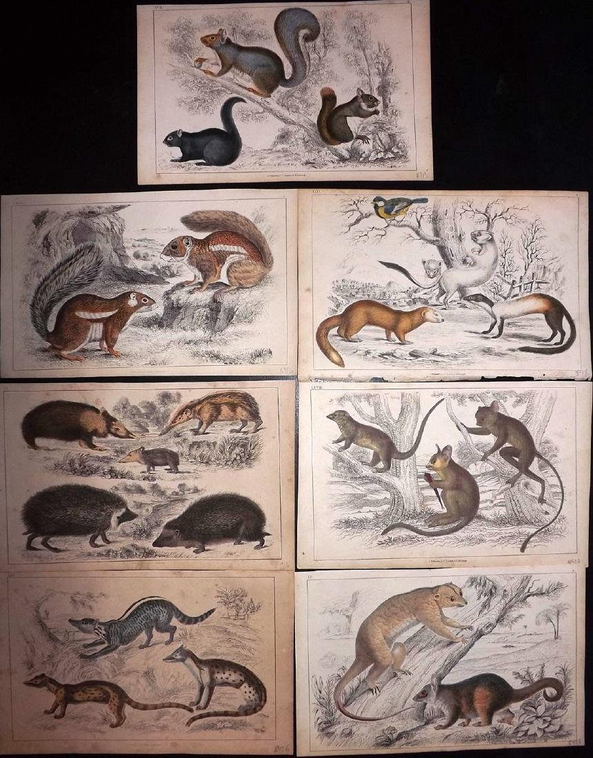 Goldsmith, Oliver 1851 Lot of 7 Hand Col Prints.