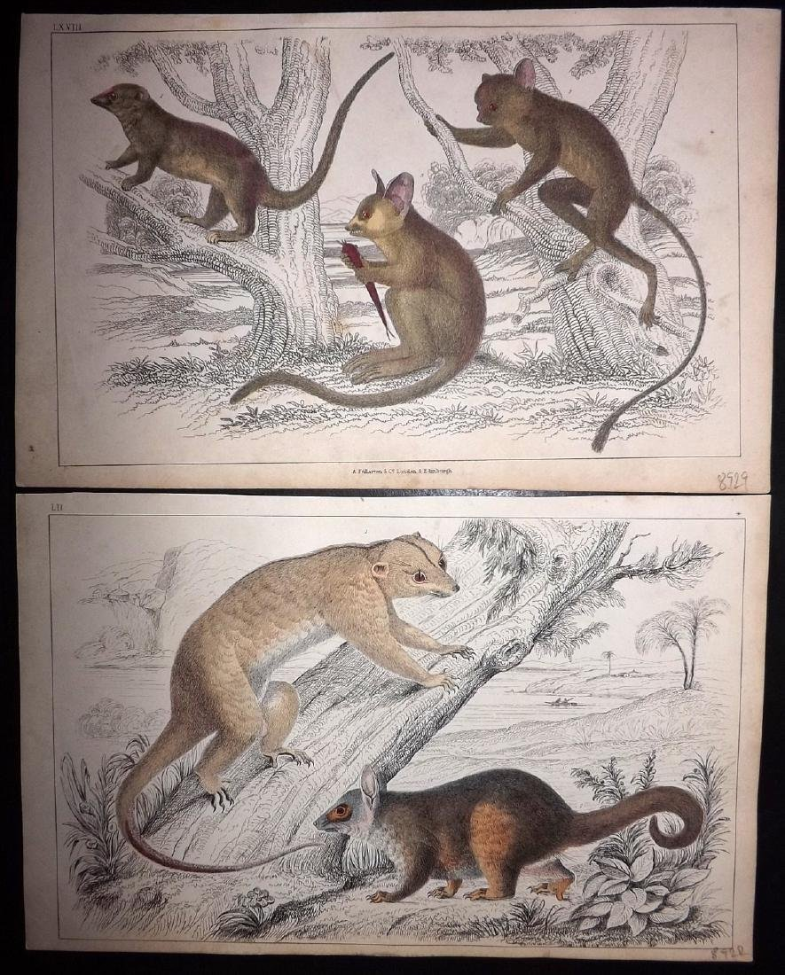 Goldsmith, Oliver 1851 Lot of 7 Hand Col Prints. - 2