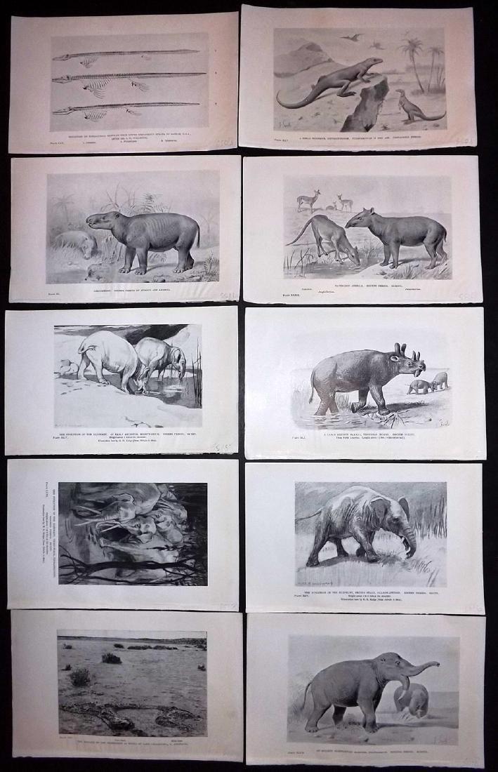 Hutchinson, H. N. 1910 Lot 10 Extinct Mammals